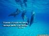 Дельфины под водой