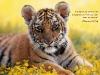 Тигр среди цветов