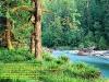 Опушка леса у реки