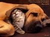 Котенок с собакой